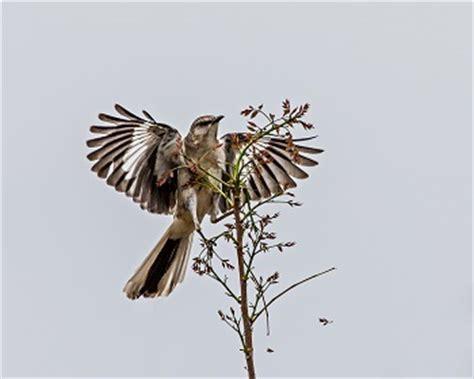 To kill a mockingbird essay on life lessons